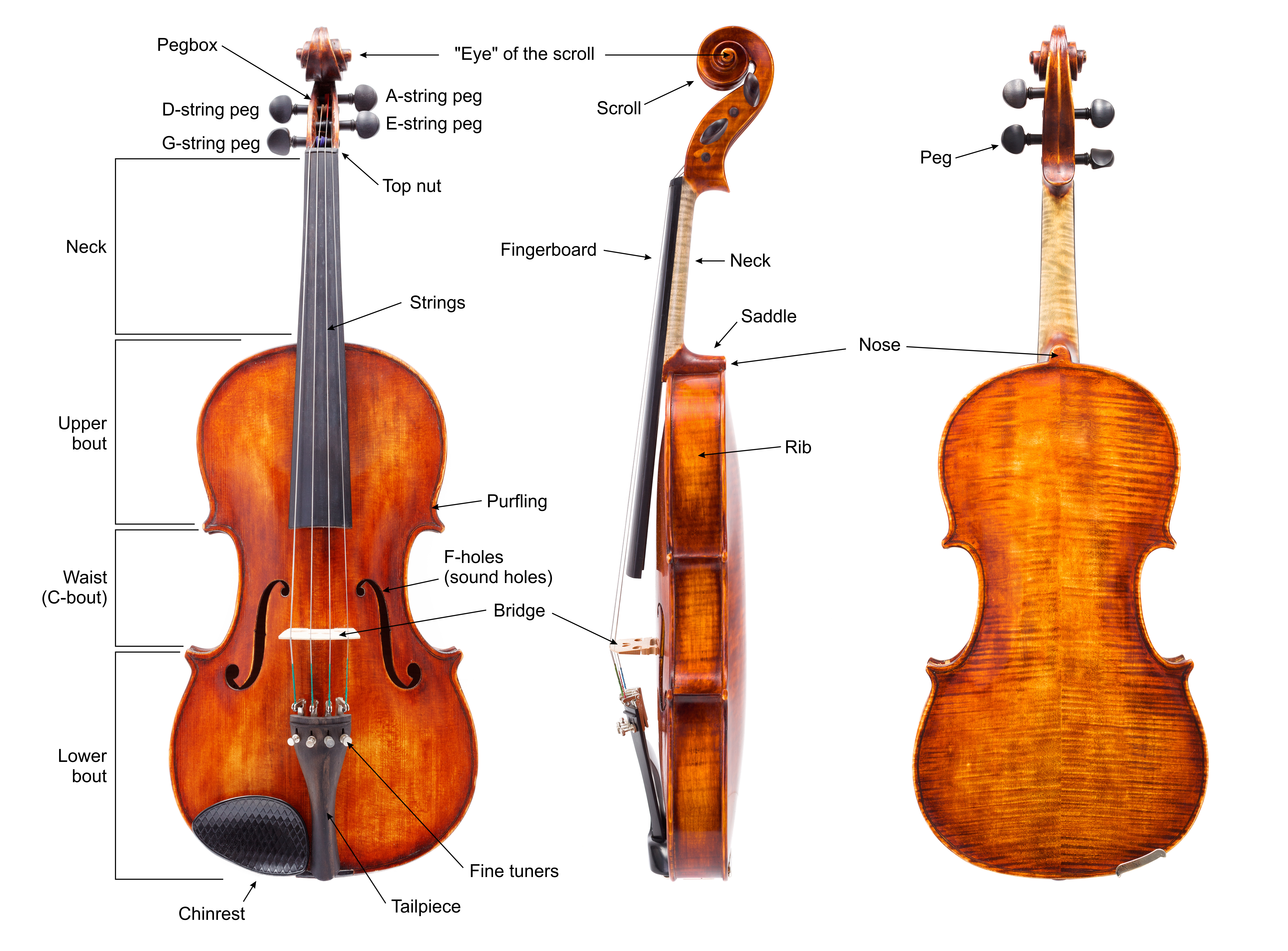 Anatomy of a violin with English labels